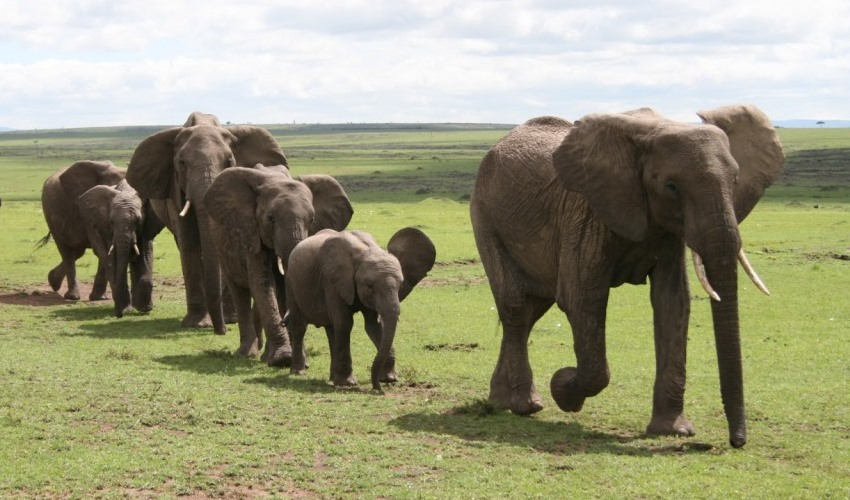 amboseli kenya_east africa_jungle_safaris