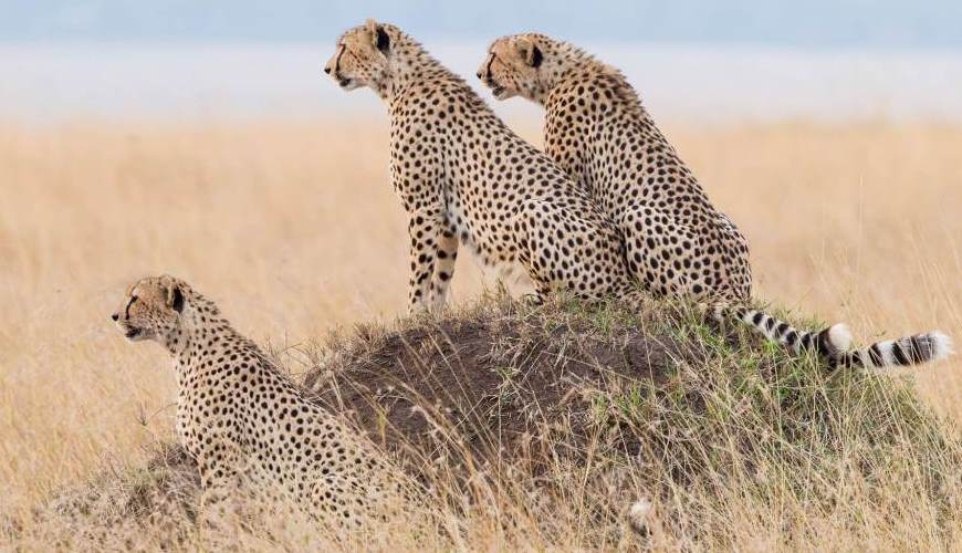Great Migration Kenya 3 days,migration kenya,great wildebeest migration,best time to visit kenya,kenya budget safaris,kenya luxury safari