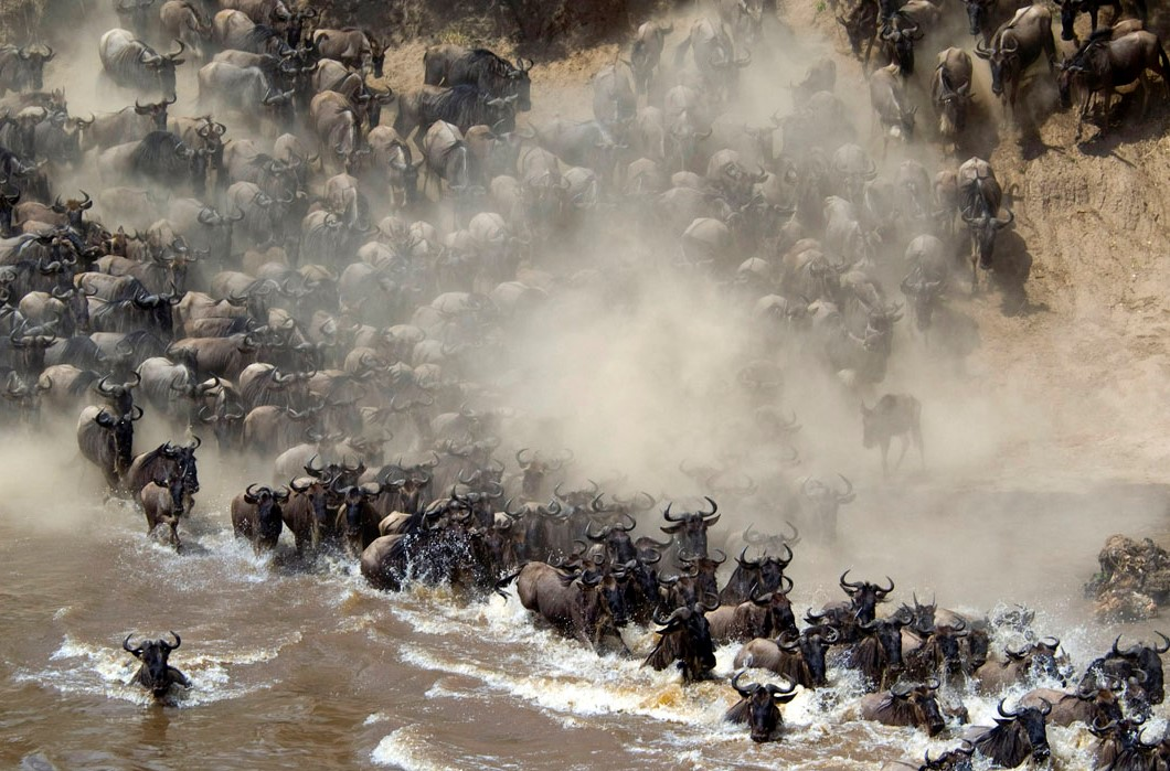 kenya migration.great migration kenya_east africa jungle safaris